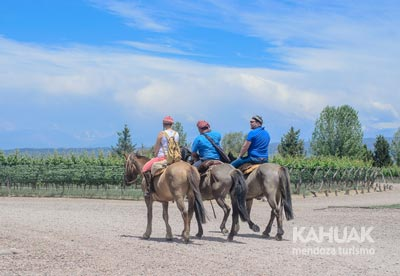 Horseback Riding Through the Vineyards