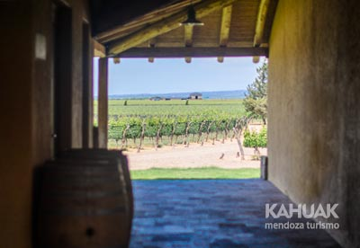 Maip� Wines and Flavors
